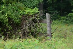 Disappearing fence Stock Image
