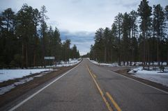 Disappearing Forest Road - Arizona Royalty Free Stock Photos