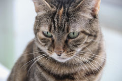 Disappointed cat royalty free stock photo