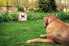 Disappointed dog. Next to the sign for the ban in the park Stock Image