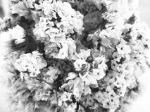 The disappointment of love concept. Dry flowers with black and w. Hite color image. selective focus and copyspace Royalty Free Stock Photos