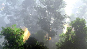 Disaster with fire in the forest 3d rendering Royalty Free Stock Image