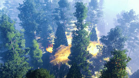 Disaster with fire in the forest 3d rendering Stock Photography