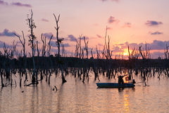 Disaster Mangrove From Dam Royalty Free Stock Photography