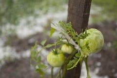 Disastre da tempestade da saraiva no jardim imagens de stock royalty free