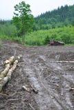 Disastre do desflorestamento foto de stock