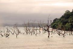 Disastro di Tsunami Fotografia Stock