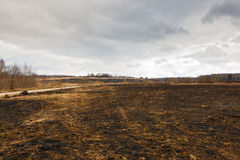 Disastrous consequences of   fires. Disastrous consequences of forest fires Royalty Free Stock Images
