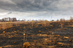 Disastrous consequences of   fires. A forrest after a bushfire Stock Photography