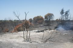 Disastrous effects of an arson and of Its dousing in a forest. Letal effects of an fire and of Its dusing with water bombers in a forest near Rome Stock Photography