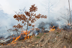 火在橡木森林里 免版税库存照片