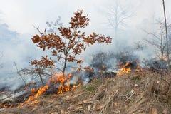 Le feu dans la forêt de chêne Photos libres de droits