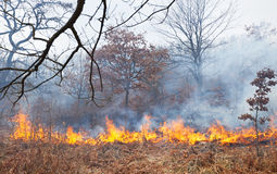 Fire in oak forest Royalty Free Stock Photography