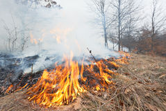 Fire in oak forest Stock Photography