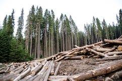 Disboscamento Immagine Stock