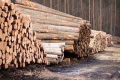 Disboscamento Fotografia Stock