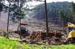 disboscamento Immagini Stock