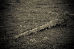 disboscamento Fotografie Stock