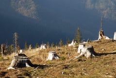 Disboscamento Fotografie Stock Libere da Diritti