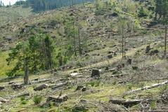Disboscamento Fotografia Stock Libera da Diritti