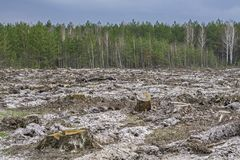 disboscamento Ceppo dell'albero fotografia stock libera da diritti
