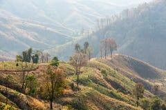 Disboscamento e coltivare Immagine Stock Libera da Diritti