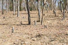 Disboscamento e sradicamento di alberi Fotografia Stock Libera da Diritti