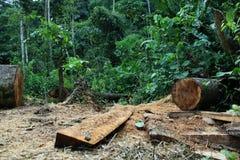 Disboscamento: l'albero ha tagliato e giungla o foresta tropicale nei precedenti immagini stock