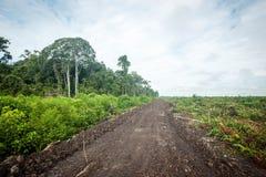 Disboscamento nel Borneo Immagini Stock