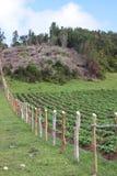 Disboscamento per agricoltura Immagini Stock