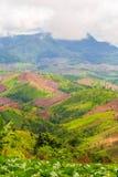 Disboscamento per agricoltura di montagna Immagini Stock Libere da Diritti