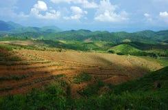 Disboscamento per agricoltura, mutamento climatico Fotografia Stock Libera da Diritti