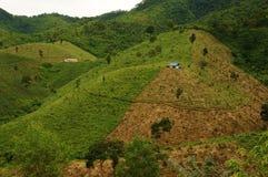 Disboscamento per agricoltura, mutamento climatico Immagine Stock Libera da Diritti