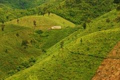 Disboscamento per agricoltura, mutamento climatico Fotografia Stock
