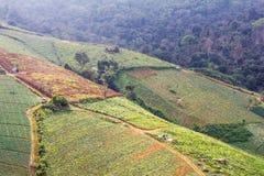 Disboscamento per coltivazione Fotografie Stock