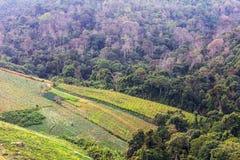 Disboscamento per coltivazione Immagine Stock