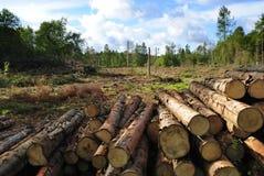 Disboscamento svedese Fotografie Stock Libere da Diritti