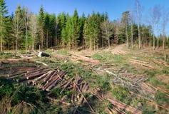 Disboscamento svedese Immagini Stock