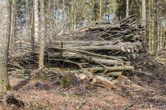 Disboscamento, uccisione della foresta Fotografia Stock