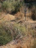 Wild Disc Golf Course royalty free stock photos