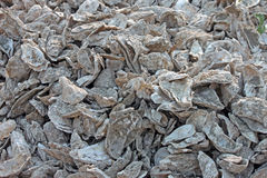 Discard Pile of Oyster Shells Royalty Free Stock Photography