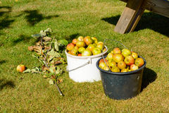 Discarded apples Royalty Free Stock Photography