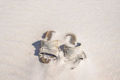 Discarded Beach Sandals2 Stock Photo