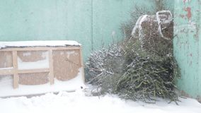The discarded Christmas tree after the new year on the trash, winter, blizzard. Garbage stock video footage