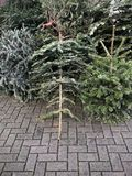 Discarded christmas trees piled on pavement for garbage removal. In Germany Stock Images