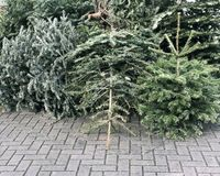 Discarded christmas trees piled on pavement for trash collection. In Germany Royalty Free Stock Photo