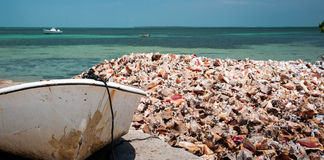 Discarded Conch Shells on the Boat Ramp Royalty Free Stock Photo