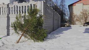 Christmas tree lies near a public recycling bins trash after new year in the town. The discarded fir-tree after end of stock footage