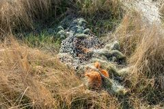 Discarded fishing net. Polluting the coast near Gibraltar Point, near Skegness, UK royalty free stock photo