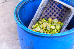 Discarded lemon peel in blue trashcan Stock Photography